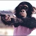 【おもしろ画像】あらゆる動物たちのいろいろな面白い画像を集めてみましたww