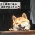 【放送事故画像】テレビ見てたら思わず吹き出してしまった放送事故画像www