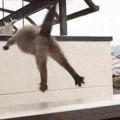 【ハプニングGIF画像】ドジな動物たちの行動が可愛すぎて癒され笑かされちゃうww