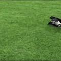 【動物ハプニングGIF画像】思わずにやけてしまう動物たちのハプニングが可愛すぎww